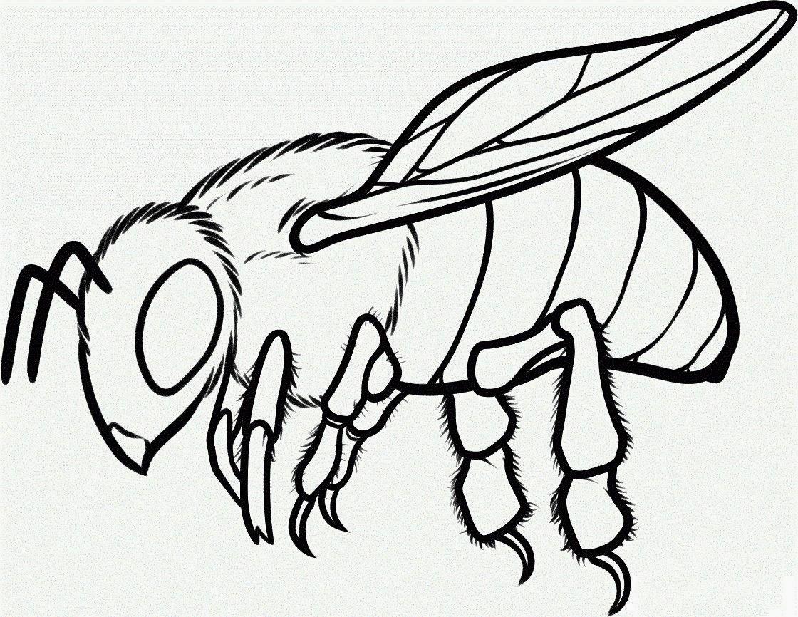 La Chachipedia: Dibujos de abejas para colorear