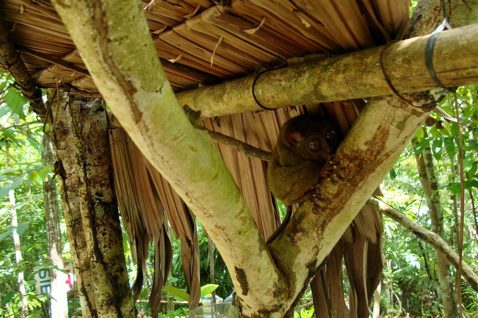 Bohol Tarsier Conservation Area
