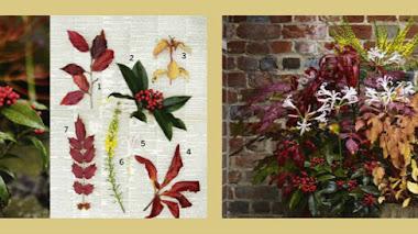 Inspiración en maceta. Plantas de otoño en un barril