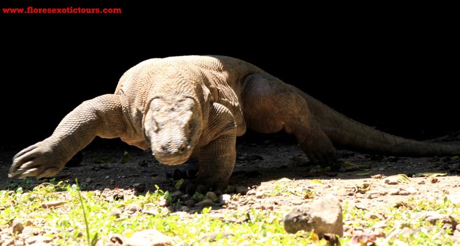 Komodo National Park and Sumba