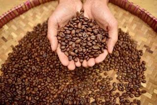 proses sangrai kopi osing