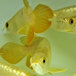 All About Aquarium Fish: Make Money off Fishkeeping Hobby