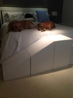 rampas para cães grandes e pesados em camas altas