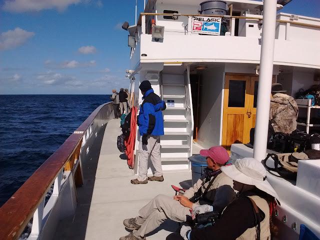 Pelagic birding boat trip
