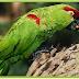 Neurocientistas descobrem porque os papagaios são tão inteligentes