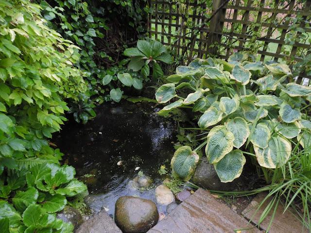Country Garden, woda mini, małe oczko wodne w ogrodzie