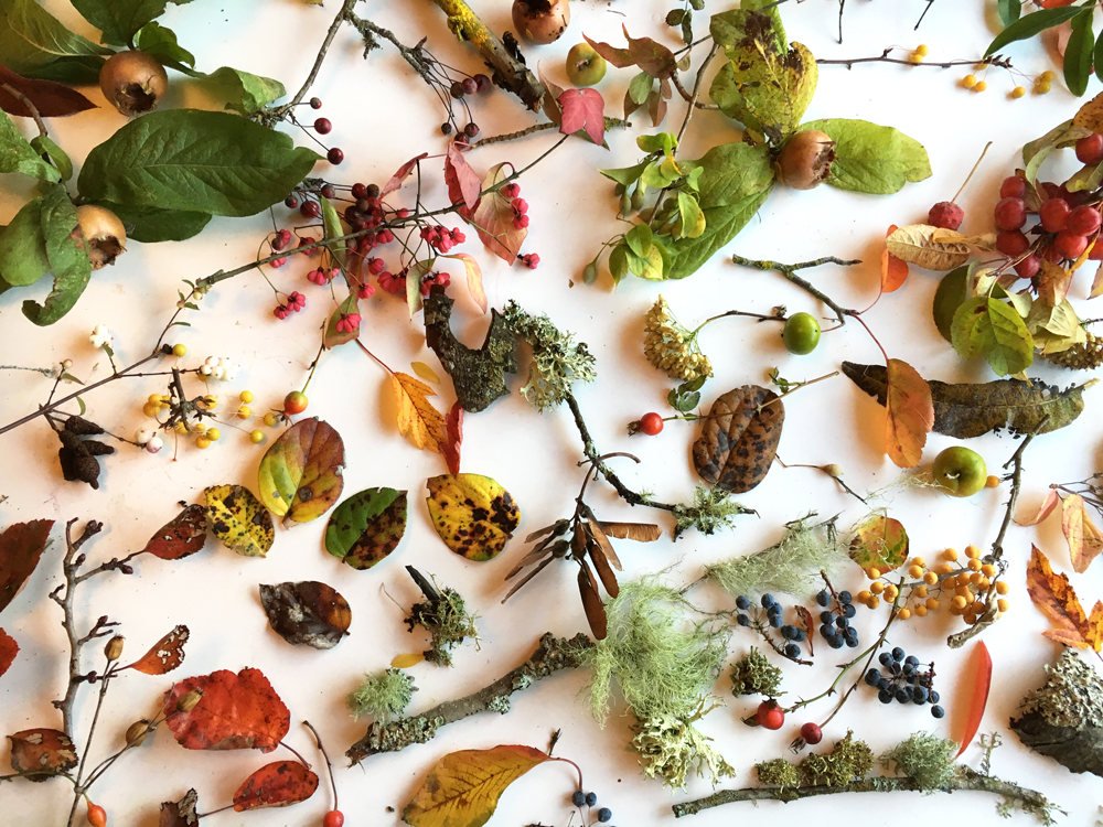 Collection of leaves , fruit and seed pods