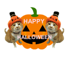 KAWASE Family nyanko    Halloween
