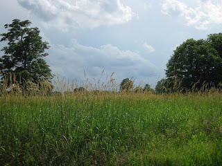Meadow with trees and looming gray clouds in the background.
