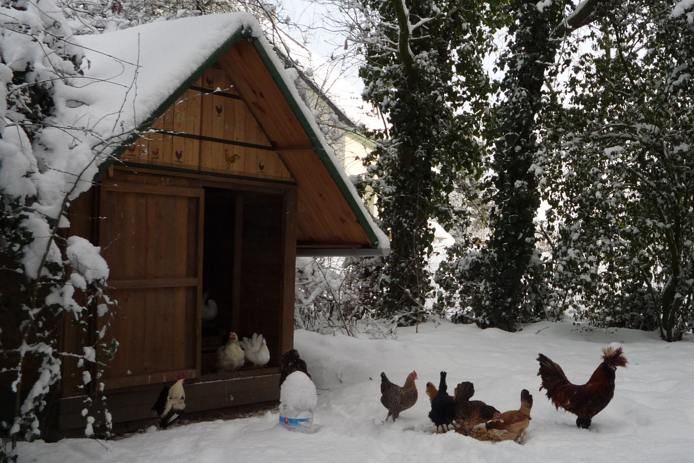 Building a pallet wood hen house chicken coop and for Building a hen house