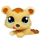 Littlest Pet Shop Petriplets Bear (#1554) Pet