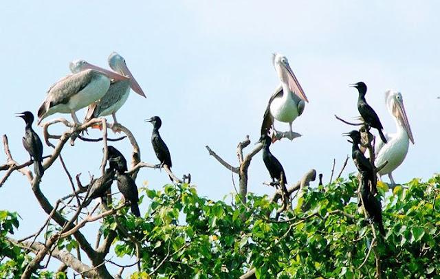 Chim thú ở vườn chim Bạc Liêu