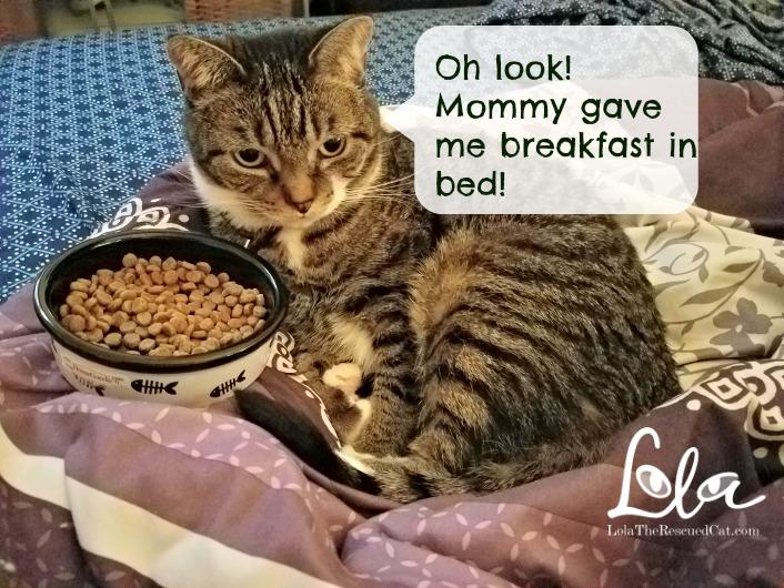 fussy eaters, tabby cats