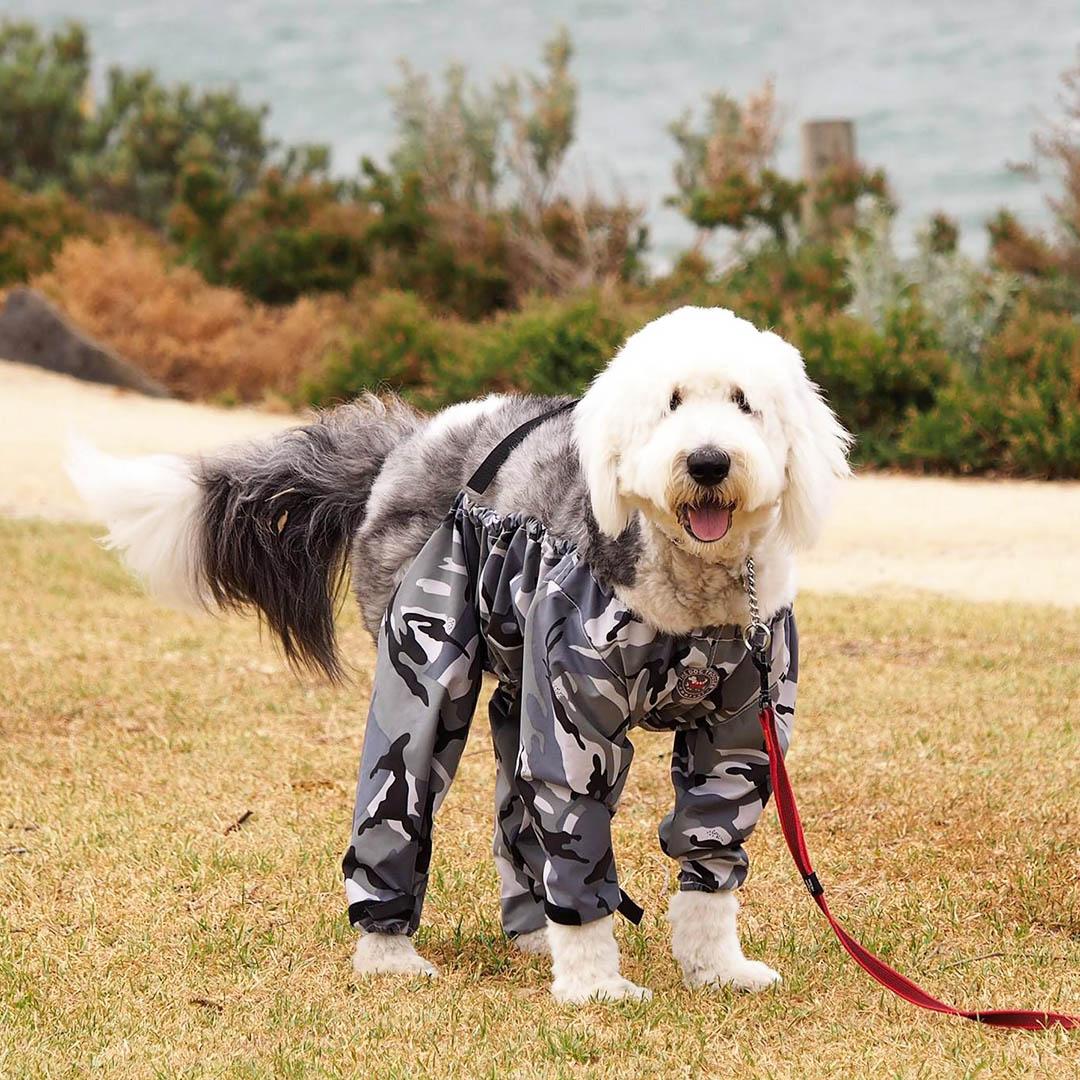 The Dog Trouser Company Australia - Review   Australian Dog