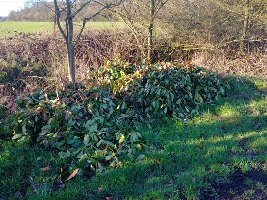 Image: Tree and shrub waste dumped along Bradmore Lane - 11 March, 2019 Image by North Mymms News released via Creative Commons BY-NC-SA 4.0