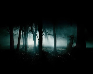 Dark-forest-image