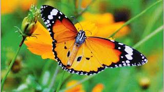 एक शिक्षाप्रद कहानी - तितली का संघर्ष | Gyansagar ( ज्ञानसागर )