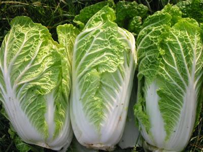 Manfaat Sayuran Sawi Putih