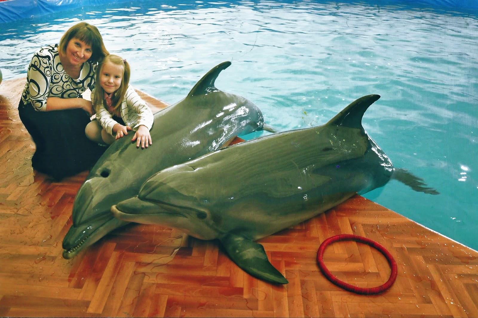 желание погладить дельфина - сбылось!