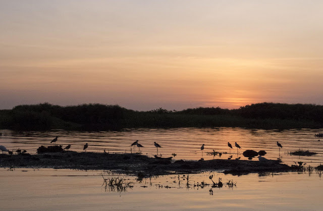Birds at sunset on Lake Victoria in Entebbe, Uganda