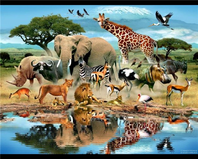 Hd wallpapers hd animated screensavers free - Moving animal wallpapers ...