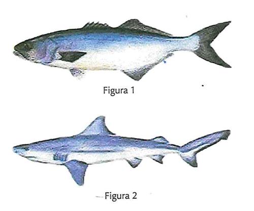 os peixes figura 1 e figura 2