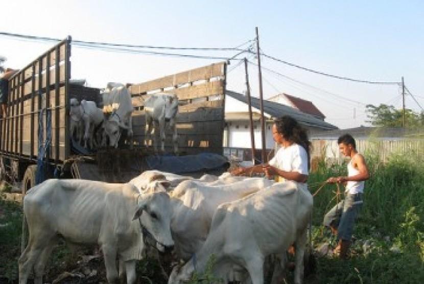 Waduh, Gara--gara Bawa Sapi Ternak, Seorang Muslim di India Dipukuli Hingga Meninggal