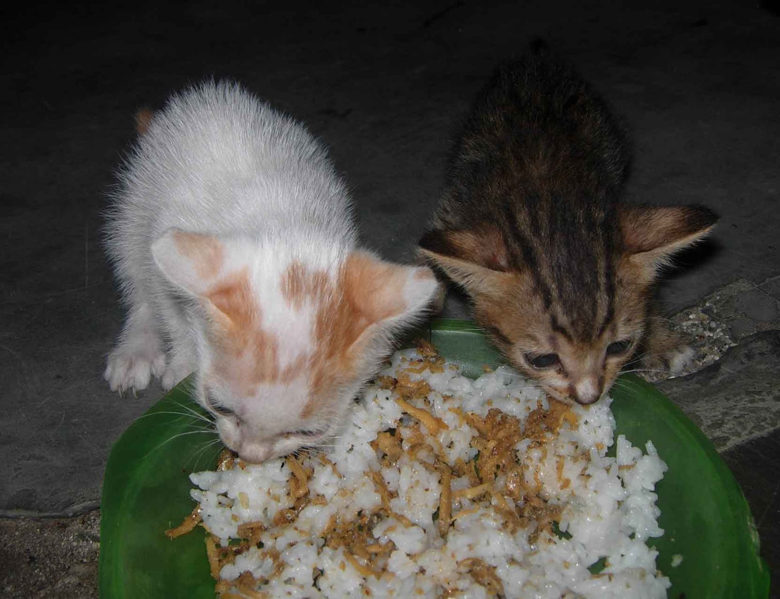 1158 Kisah Doa Kucing Yang Sedang Kelaparan Lebih Makbul Doanya