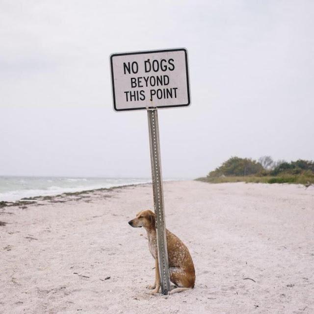 Realmente quem está quebrando as regras não é o cachorro, mas o dono. Certamente eles pagaram por isso, coitado do pobre cachorrinho