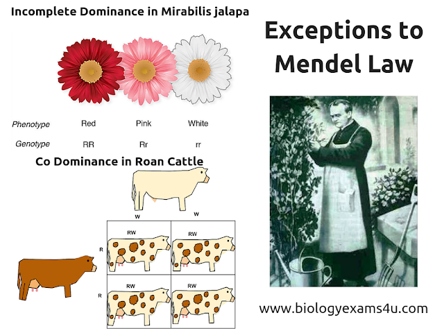 Exceptions to Mendel's laws: Incomplete Dominance and Co dominance