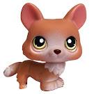 Littlest Pet Shop Pet Pairs Corgi (#183) Pet