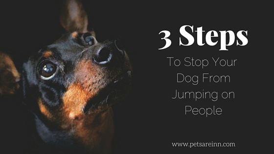 pets are inn minneapolis south a 3 step guide to stop