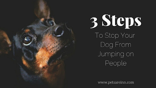 A 3 Step Guide To Stop Your Dog From Jumping on People