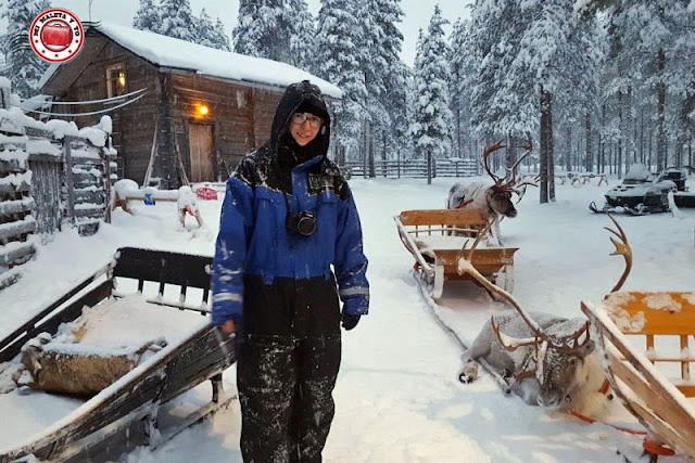 Granja de renos en Laponia Finlandesa