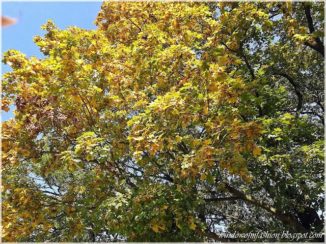 Kolorowe liście na drzewach