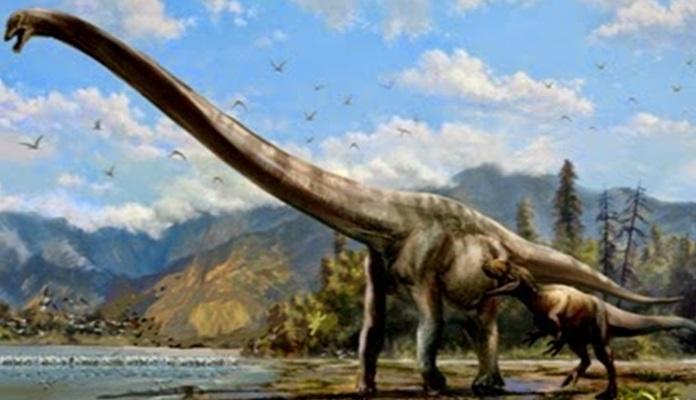 Nuova specie dinosauro dal collo lungo