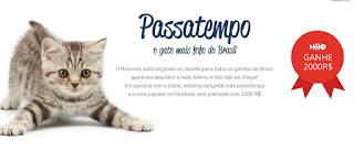 concurso cultural o gato mais fofo do brasil