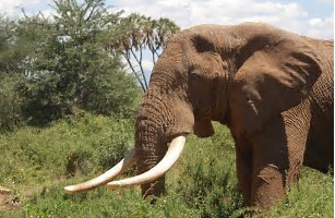 Soldier on trial for ivory possession