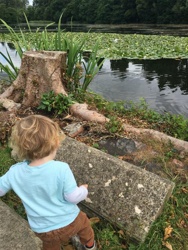 toddler-walking-at-tredegar-house-parklands-on-wall-near-lake