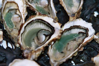 L'huître Vendée Atlantique verte