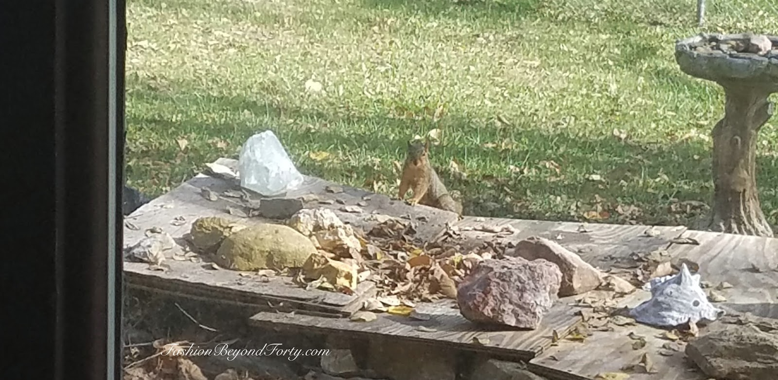 Two Nuts Harvesting Walnuts In The Fall Part Three - Final Post In The Series With Love To The Squirrels