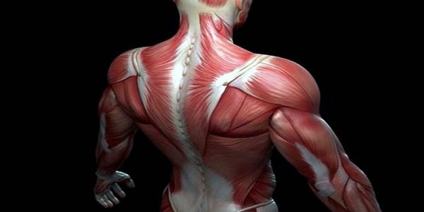 Ποιος είναι ο πιο δυνατός μυς στο σώμα μας;