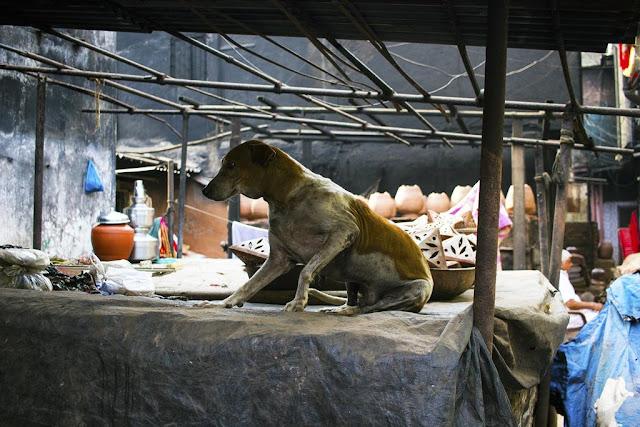 dog, waking up, kumbharwada, dharavi, mumbai, india, morning, street, street photo, street photography,