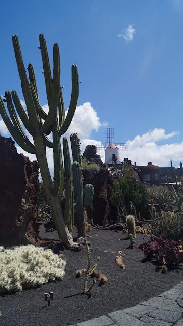 lanzarote kaktus