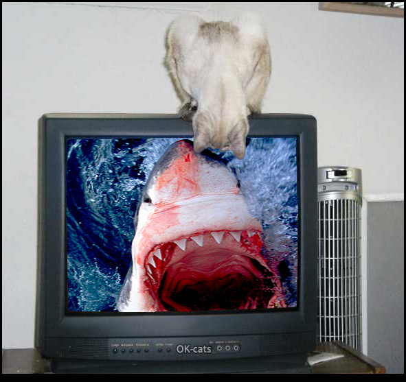 "Photoshopped  Cat picture • Curious cat discovers ferocious shark on TV. ""Excuse me Sir, but who are you?"""