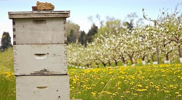 Θεσπρωτία: H μελισσοκομία στη Θεσπρωτία πάει καλά...