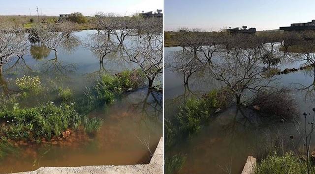 Baraj suyu bıraktı ağaçlar su altında kaldı