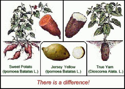 difference between sweet potatoes and yams seed to feed me what is the difference between a yam and 12952