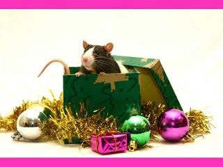 download besplatne pozadine Božićne slike za mobitele
