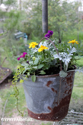 flowers planted in old bucket
